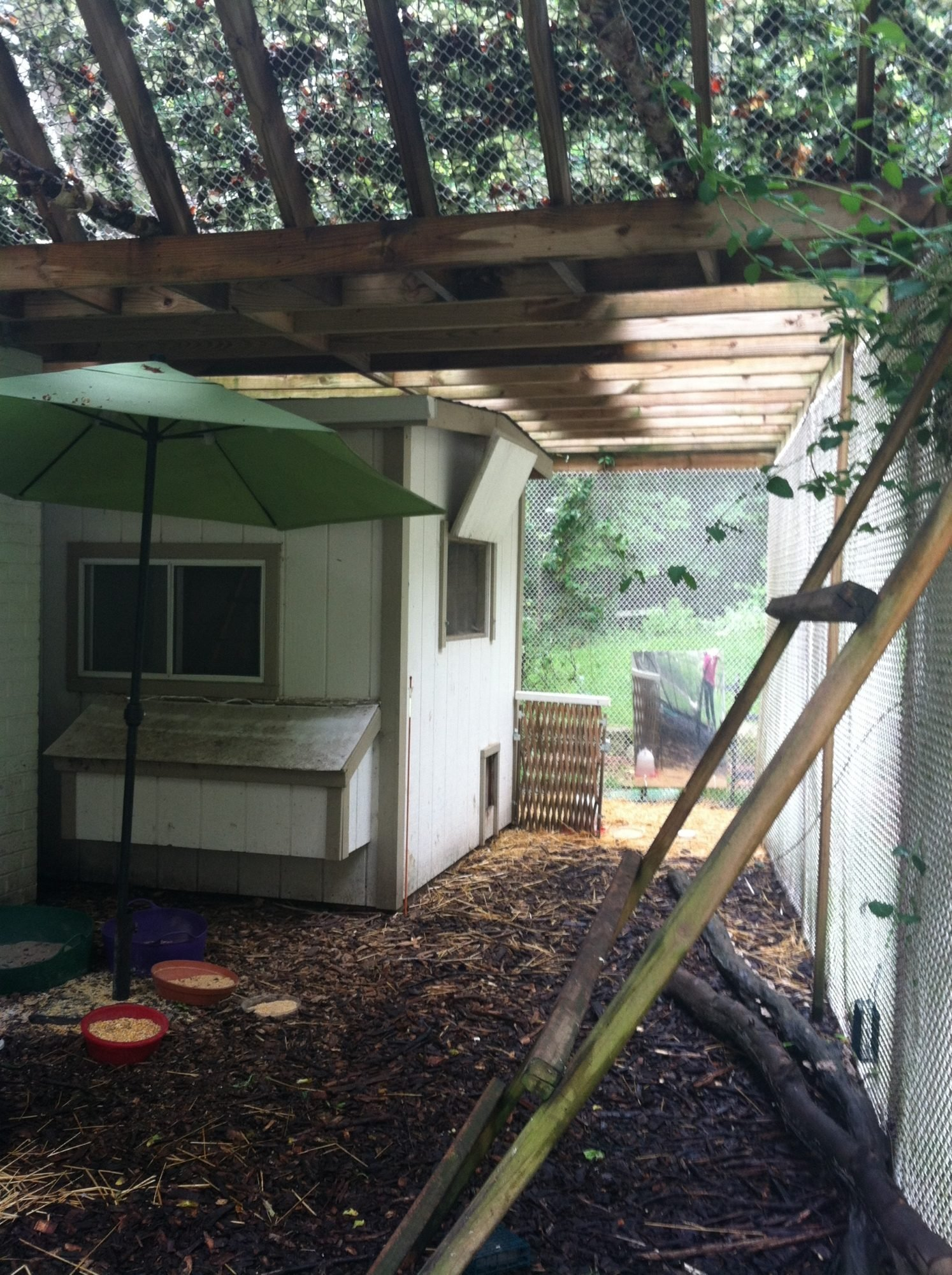 My chicken/peafowl coop.  Added patio umbrella for 2013 rainy season, to protects food bowls etc....