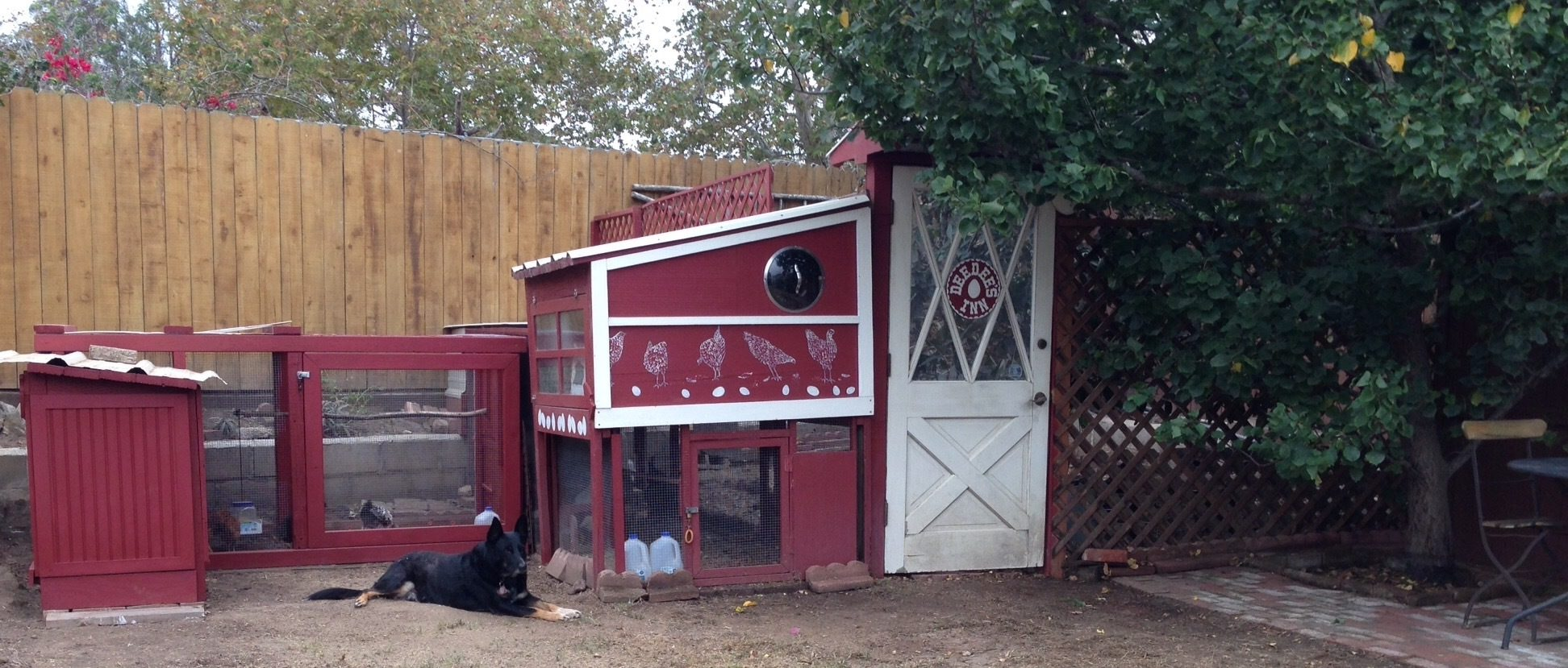 This is Deedee's Inn in Santa Barbara! Currently four hens age 16-17 months) plus four pullets and one accidental cockerel (age 2.5 months) live here (in Oct 2015). The big hens have a 4x4 coop and the young ones have a 2x4 coop. They all share three adjoining predator-proof runs that make up 80 sq ft, and share a fenced-in chicken yard with an avocado tree in it. I started building the Inn in the summer of 2014, and it has expanded bit by bit. It is built with almost all re-used materials, found through Craigslist. It has been such a fun ongoing project!