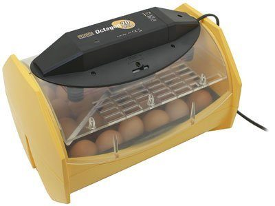Brinsea Octagon 20 ECO Auto Turn Egg Incubator