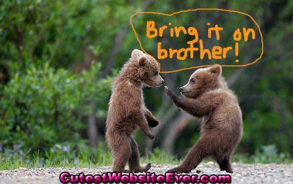 cute-cubs.jpg