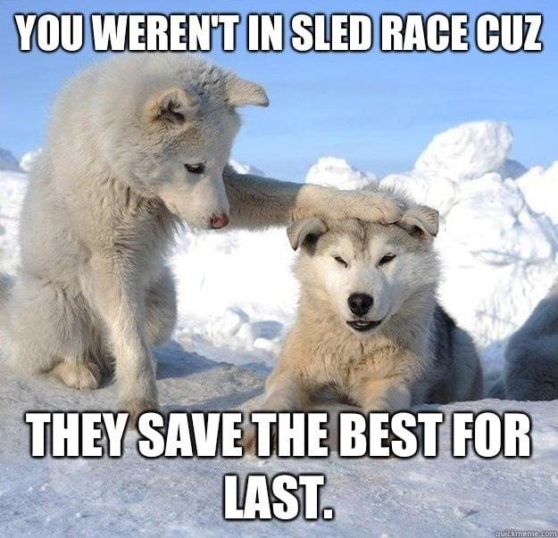 Sled dog meme.jpg