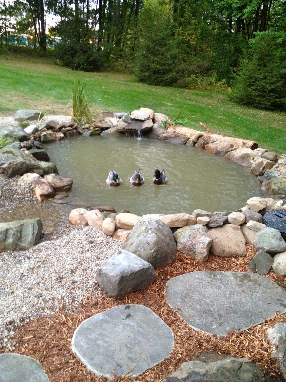 Backyard Ponds For Ducks : Nov 8, 2013 (166 views)