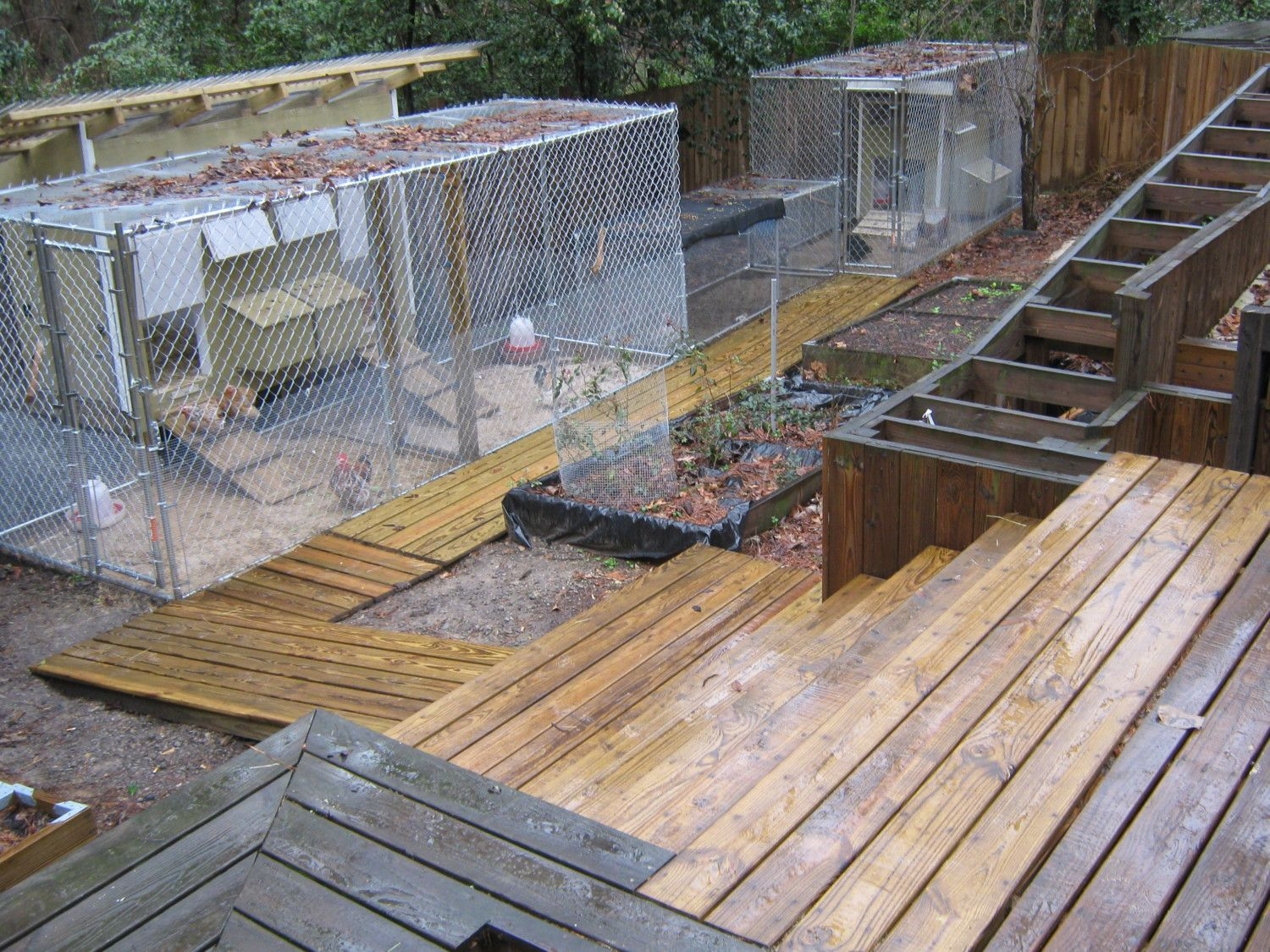 georgiagail's photos in Dog Kennel vs Coop with Run