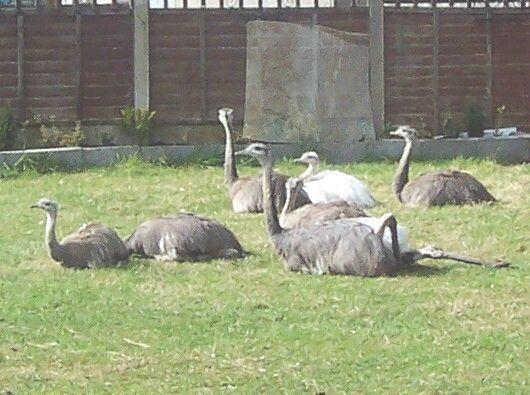 Calla's photos in rheas