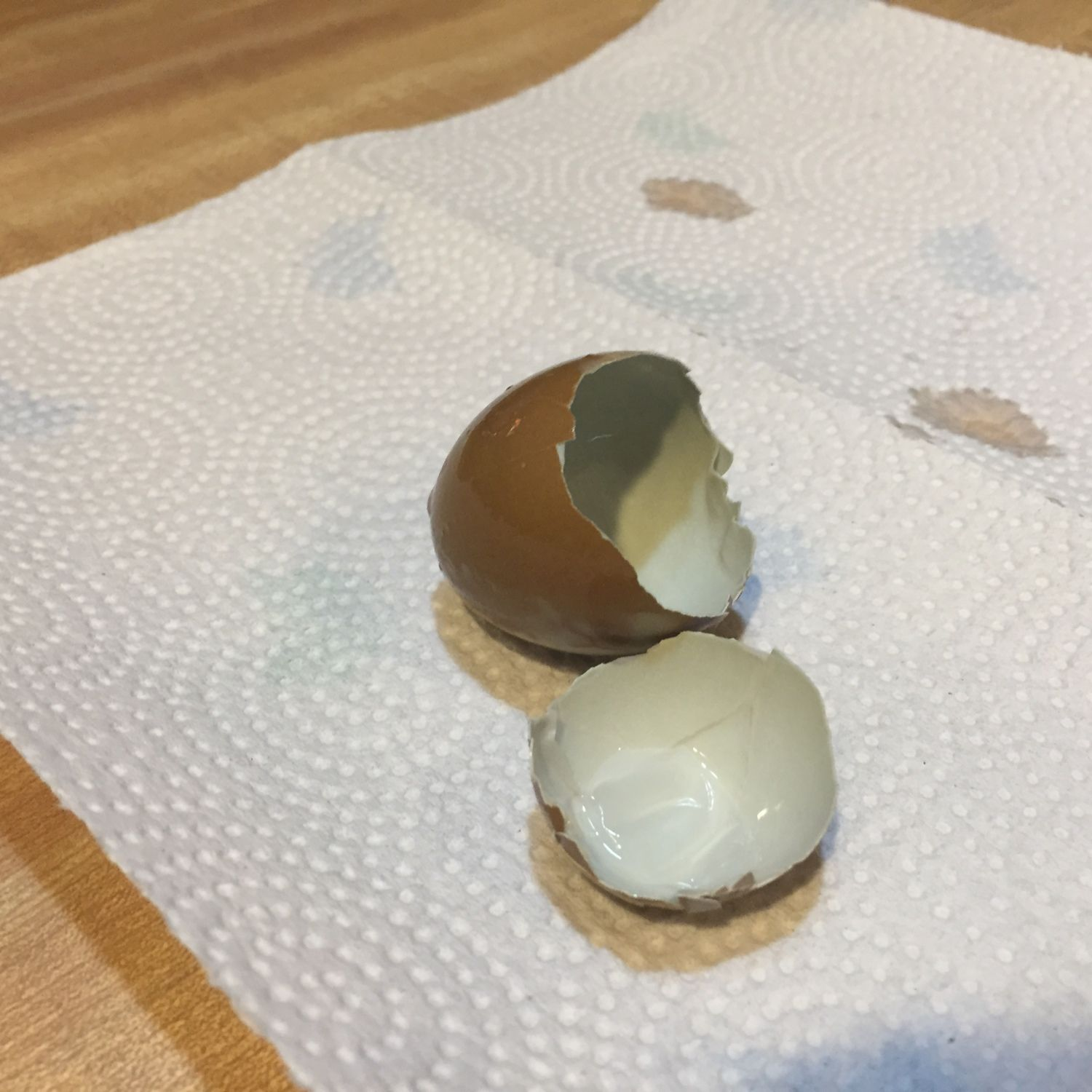 Anatomy of an olive egg. The outside appears brown in this photo because the egg is wet, when dry it's olive green. Note the inside is actually a blue shell from mom and the cuticle (bloom) is brown from dad. I'll post more olive egg pictures as I get them.