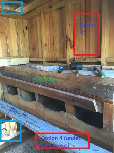 Help: Where should I construct a window in my coop?