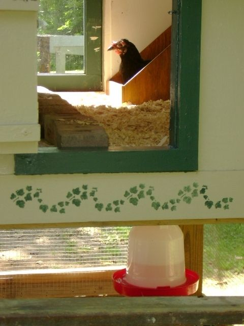 nest box and door 3.JPG