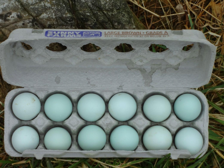 blue-eggs.jpg