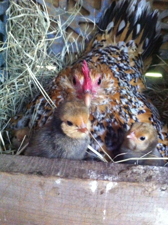 ChickenAndMore profile picture