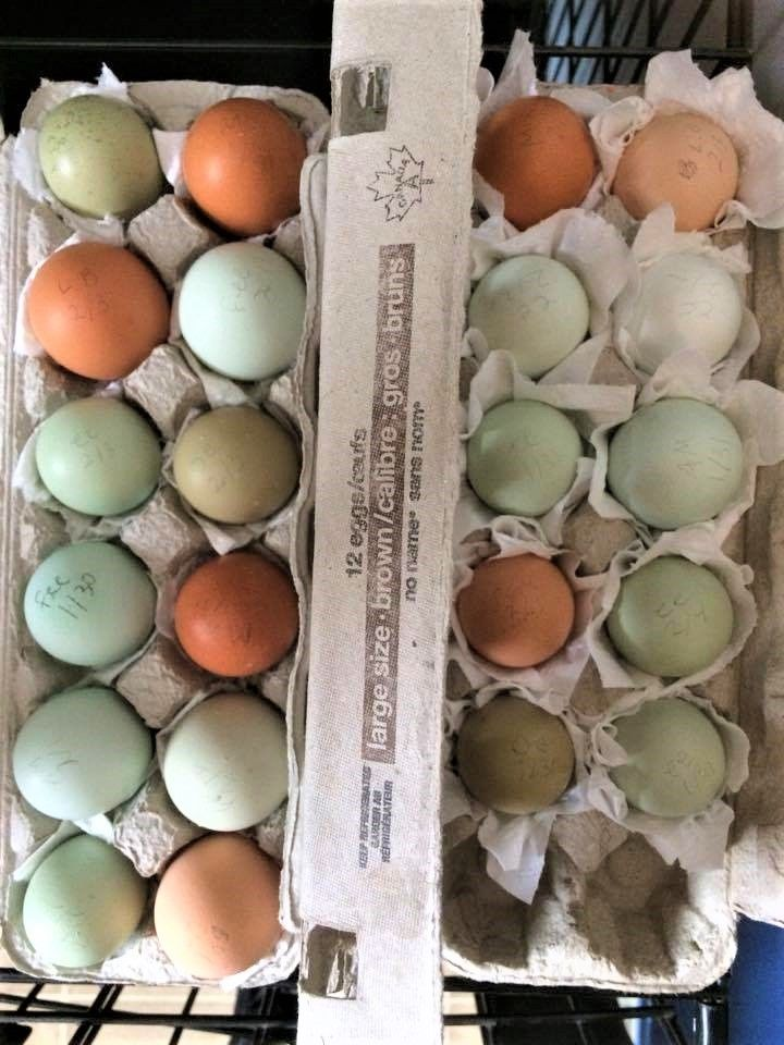 Tips for hatching eggs you sell that don't work out?