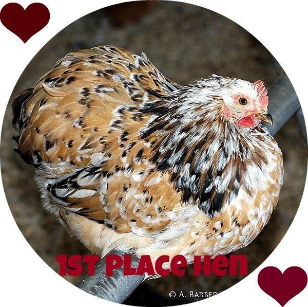 1st co hen.jpg