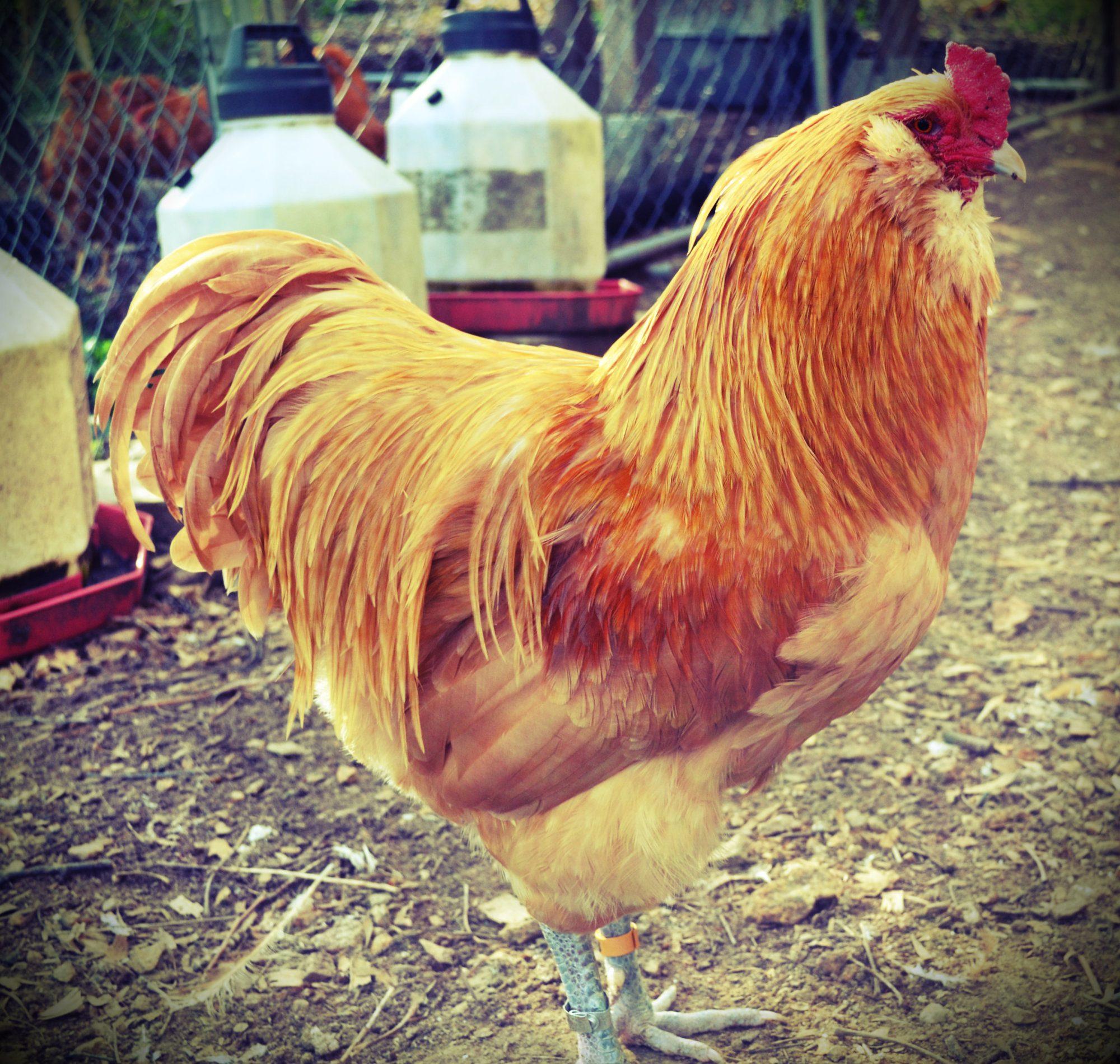 LeBlackbird profile picture