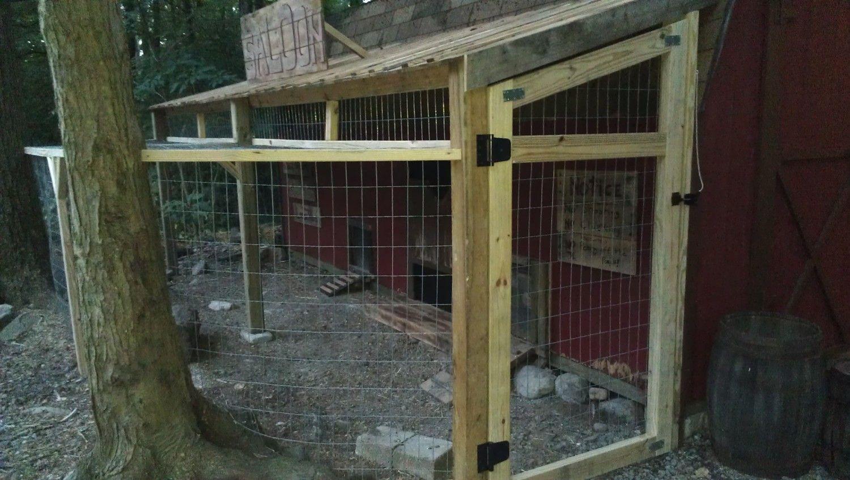 http://cdn.backyardchickens.com/5/55/55a5d878_IMAG3759.jpeg