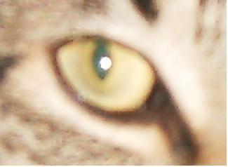 CrazyCatCulby profile picture