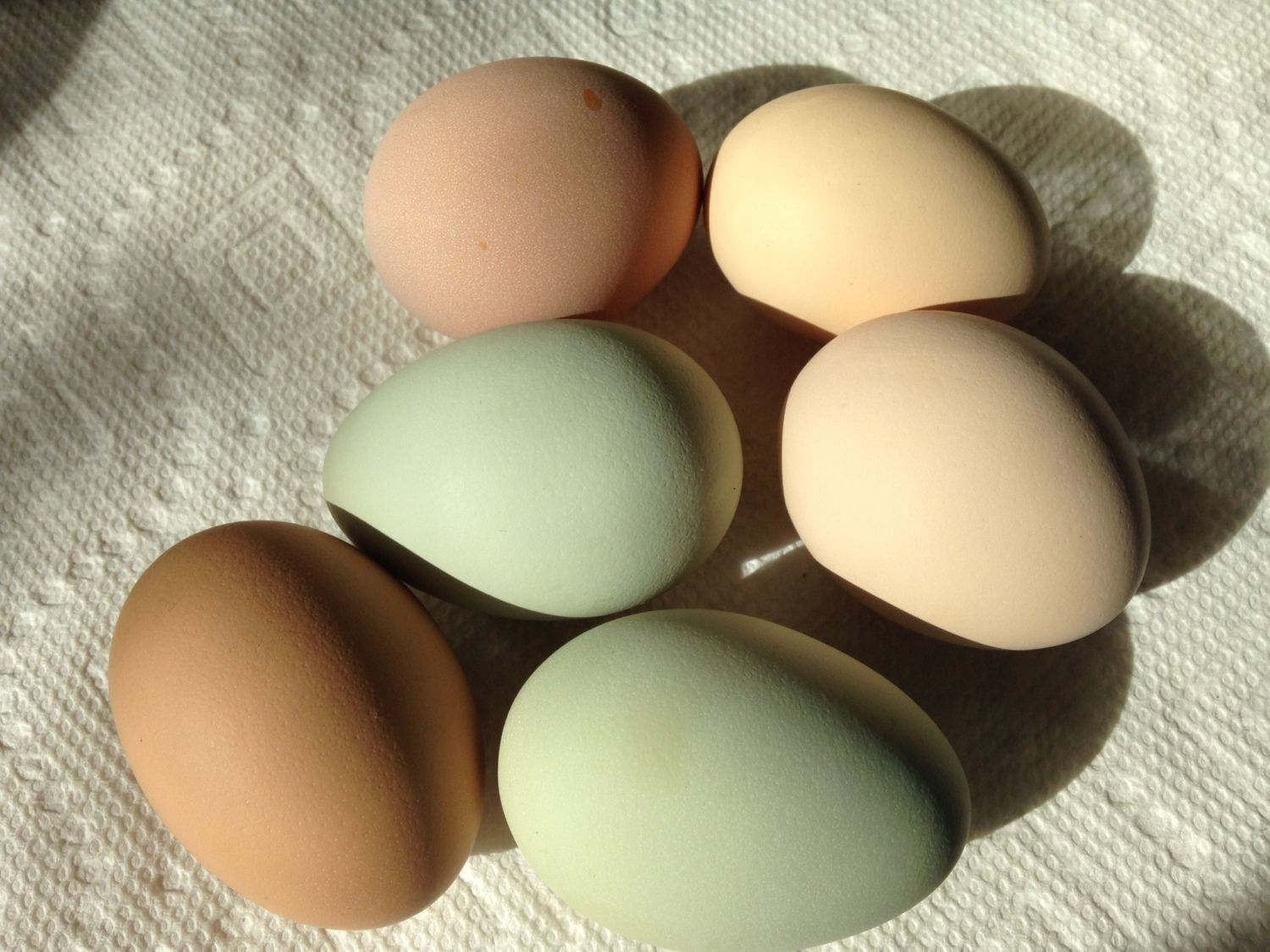 6 eggs from our 7 pullets.