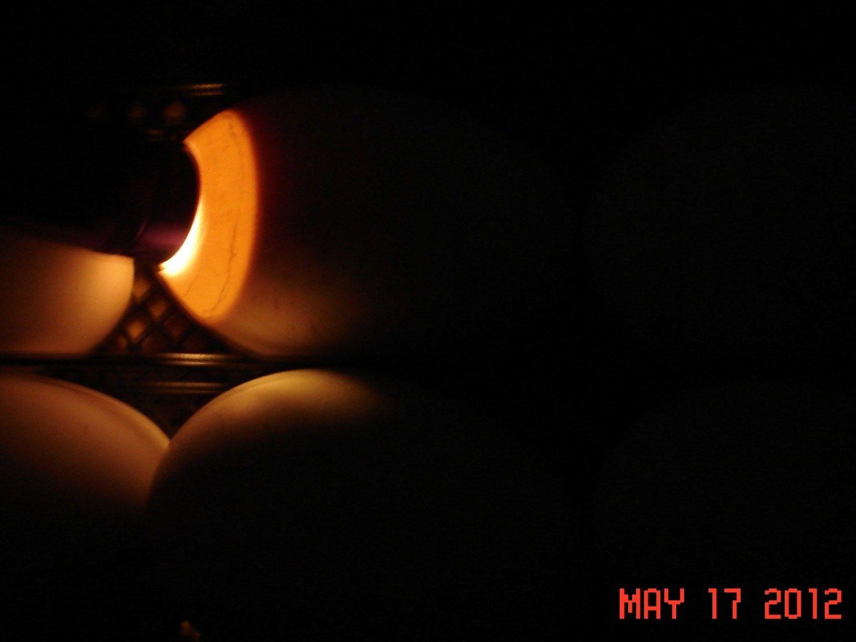 goose eggs day 25 009.JPG