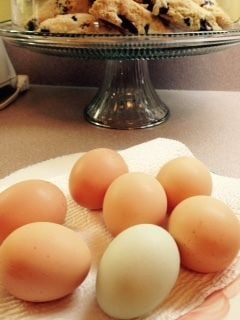 Beautiful light brown, medium brown, and moss green eggs. Now our other Easter Egger is laying too so we also get a pretty blue egg. Blueberry scones in background.