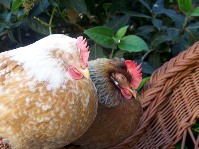 Sleepy Marigold and Millie