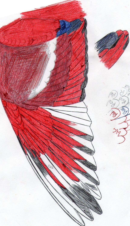 Red lory  eos bornea cyanonothus, variate.
