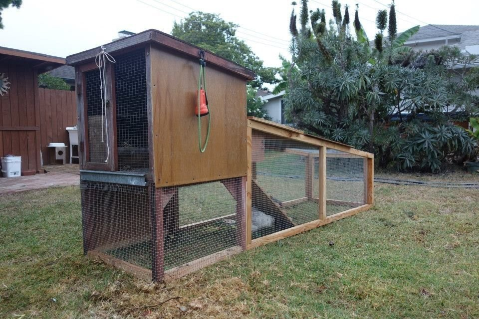 This is the first coop and run I built, a movable one, built in summer 2014 for the little classroom chicks I got. I added a run and a ladder to a rabbit hutch I had gotten from someone. One chick got out of a make-shift pen before this little Inn was completed, and our dog got that one. Then another chick turned out to be a rooster, who went to a farm. That left one pullet, a pretty gray easter egger which I named Deedee. I bought her three friends, a white leghorn, a black star, and another easter egger.