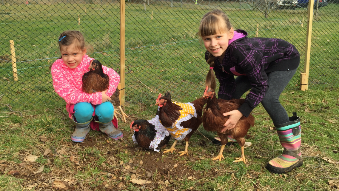 Our Rhode Island Red and Barnvelders in hand made chicken dresses!