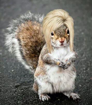 DawnieSquirrel.jpeg