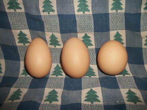 jockeyeba's photos in The Natural Chicken Keeping thread - OTs welcome!