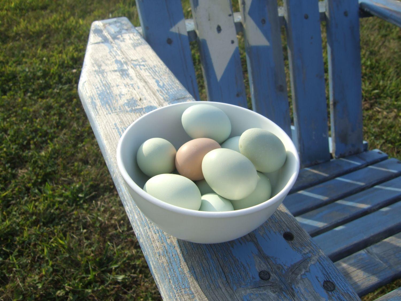 120x120px-LS-629b0776_eggs.jpeg