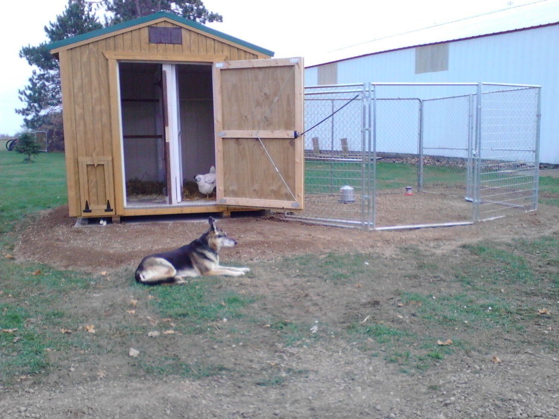 Mika, the guard dog