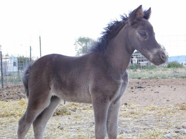 foals 2012 037.JPG