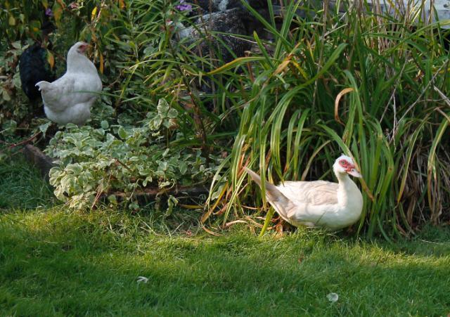 Everyone enjoying the garden :)