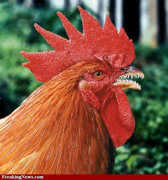 rare-chicken--16109.jpg