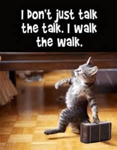 Cat talk walk.jpg