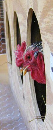 Rooster Nest 9-26-13 1 sm avatar.jpg