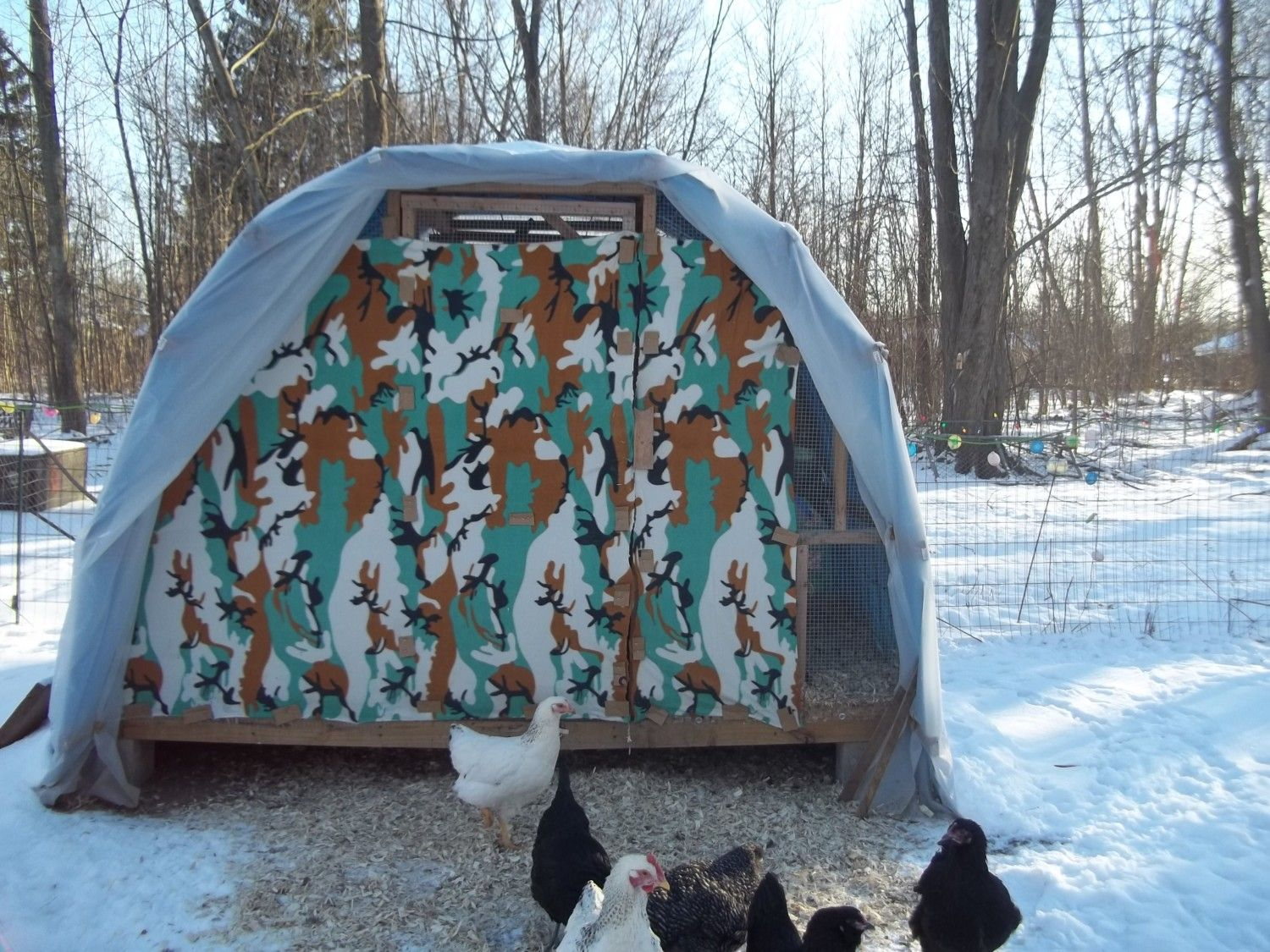 rancher hicks's photos in Can chickens stand the cold weather?