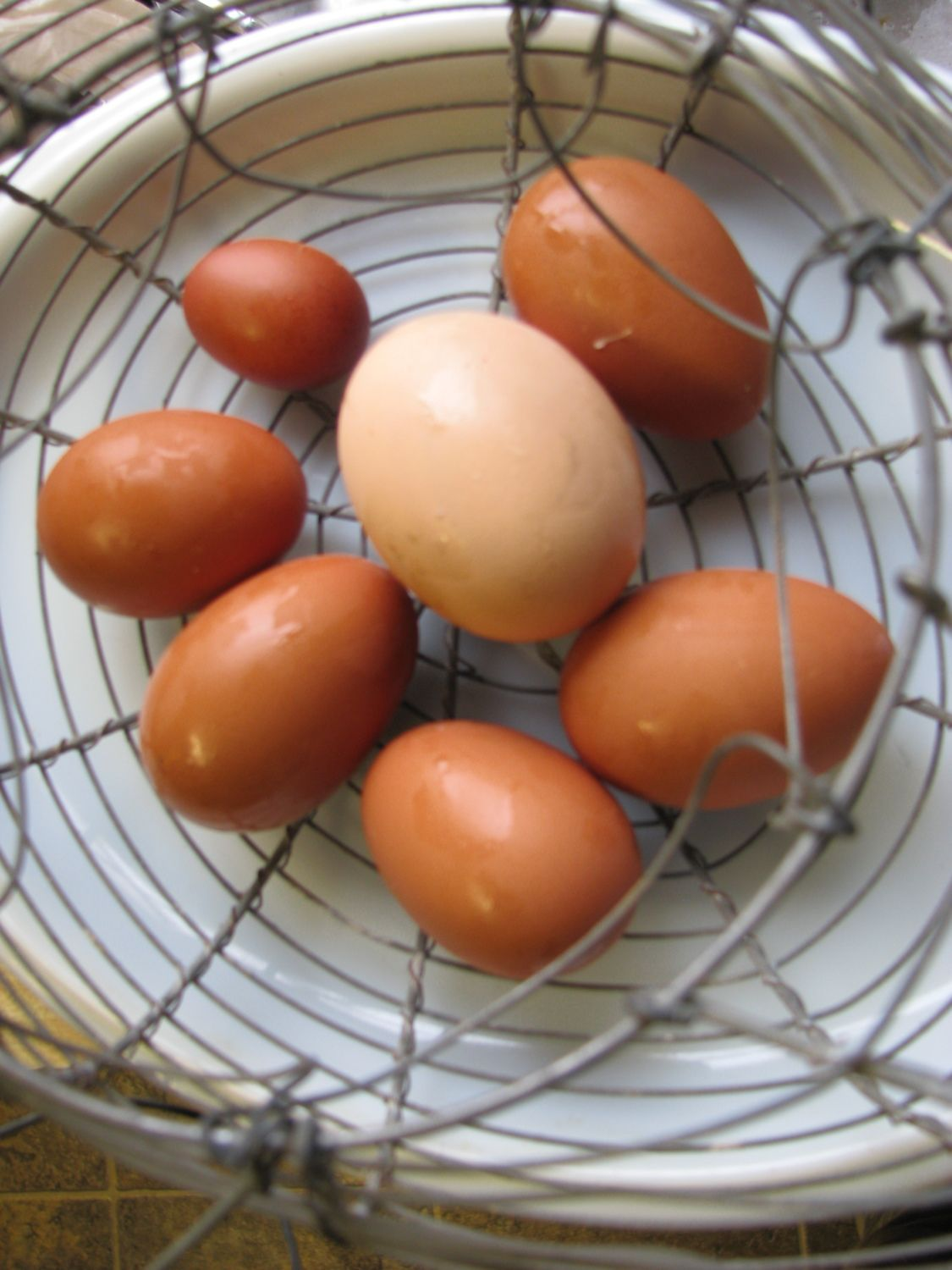First Marans eggs.JPG
