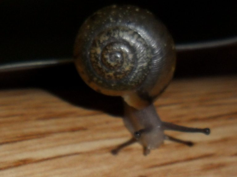 This is my Snail