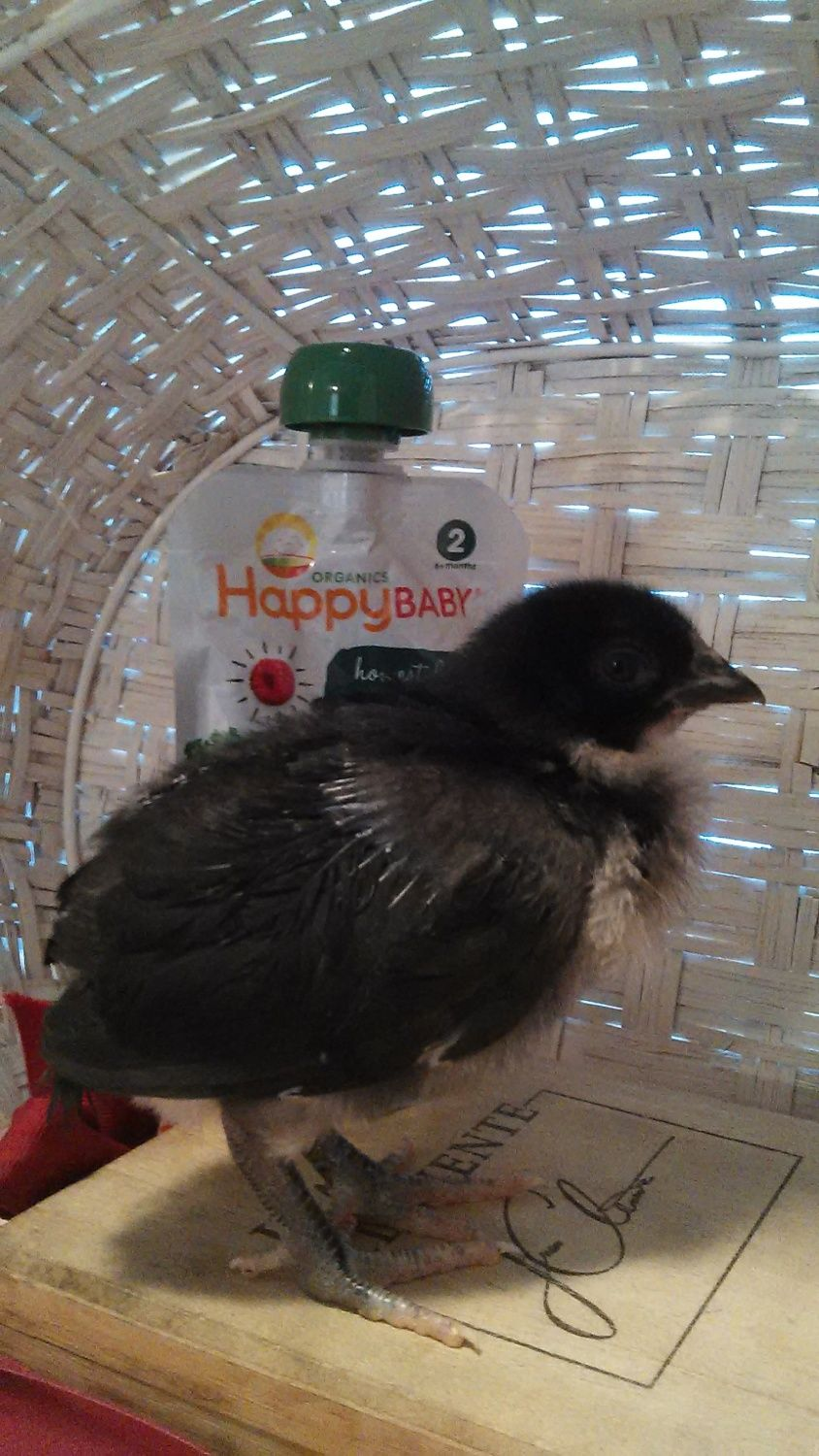 Kibbe 