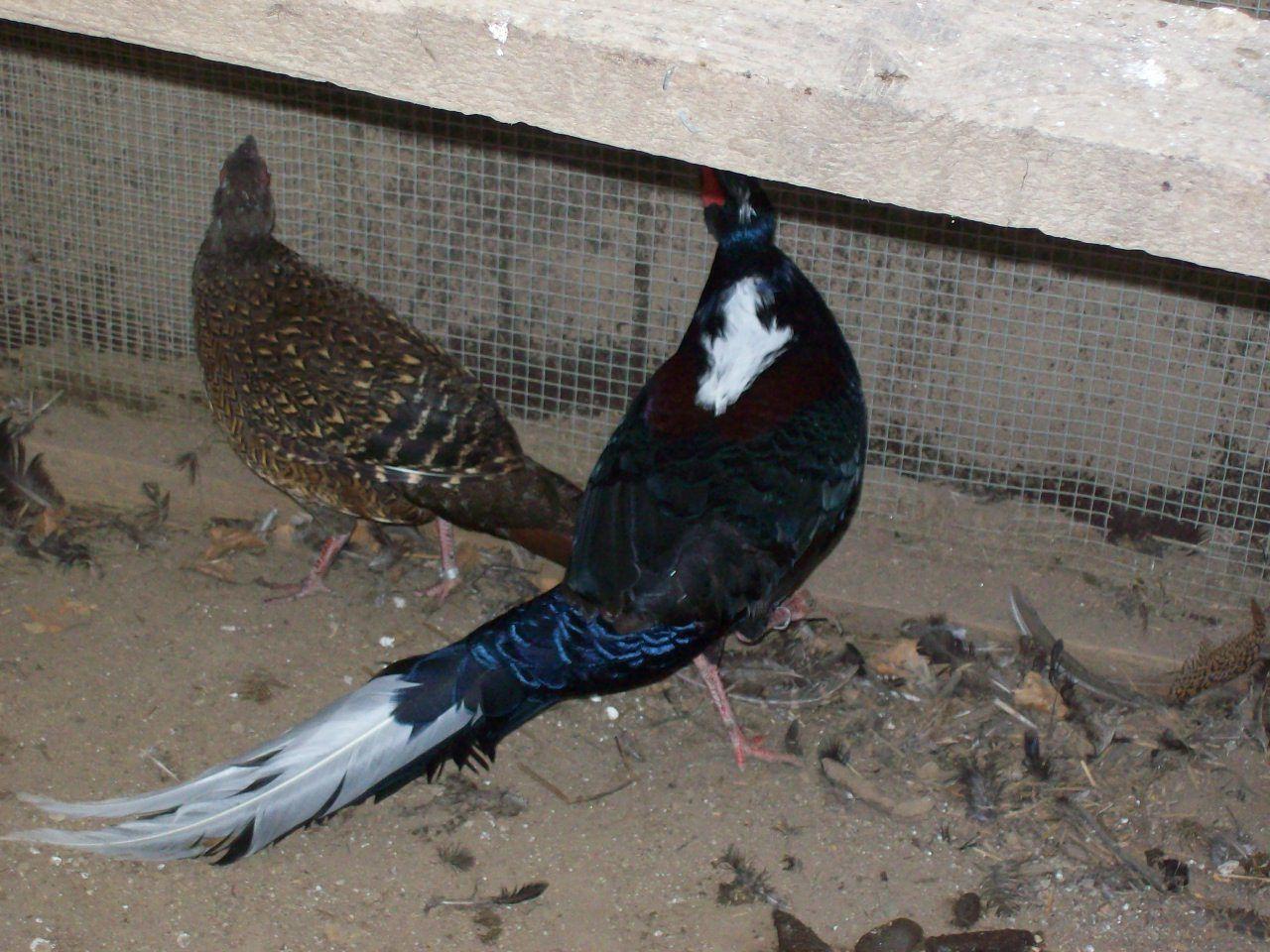 Tonys birds 222.jpg