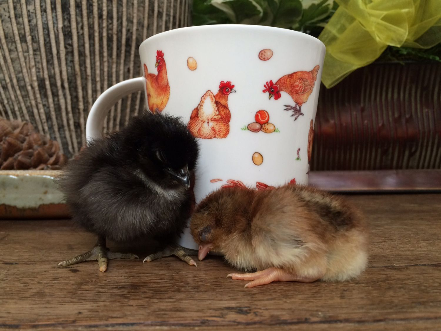 Phage's photos in Chick Mug Shots a Contest thread for participants of the Springing in the Chicks Hatch A Long