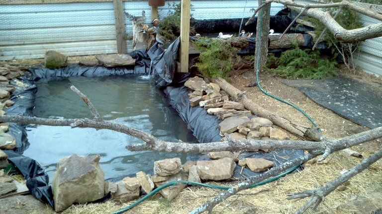 Diy Backyard Duck Pond : pen farm duck ponds duck project duck pens chicken pens aviaries ducks