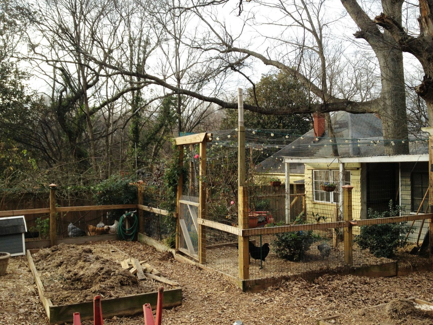 dwegg's photos in silkie coop renovation...lots of pics...