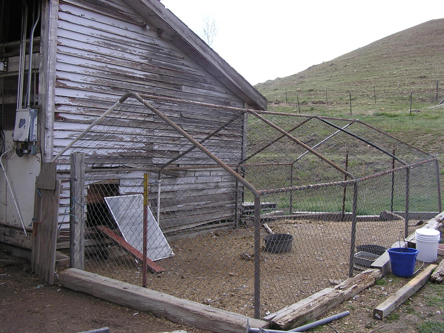 Percheron chick's photos in 6x8 shed conversion guidance, please