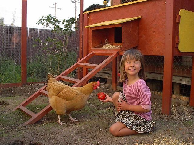 خرید مرغ و خروس برای کودکان