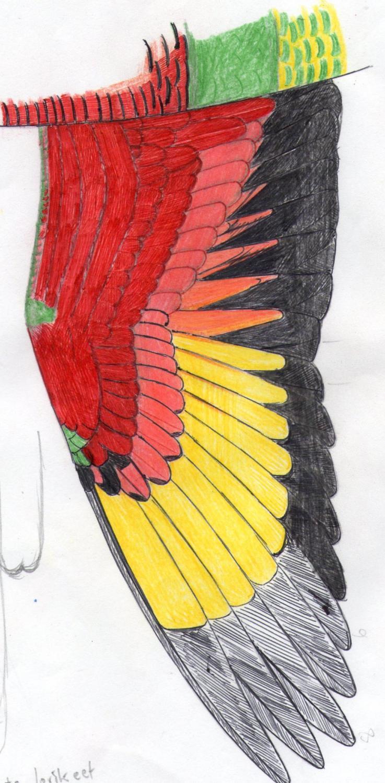 Wing of rainbow lorikeet (trichoglossus haematodus haematodus)