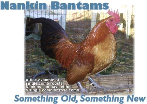 Nankin Bantams