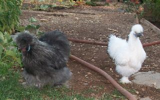 Storm and Snowball.jpg