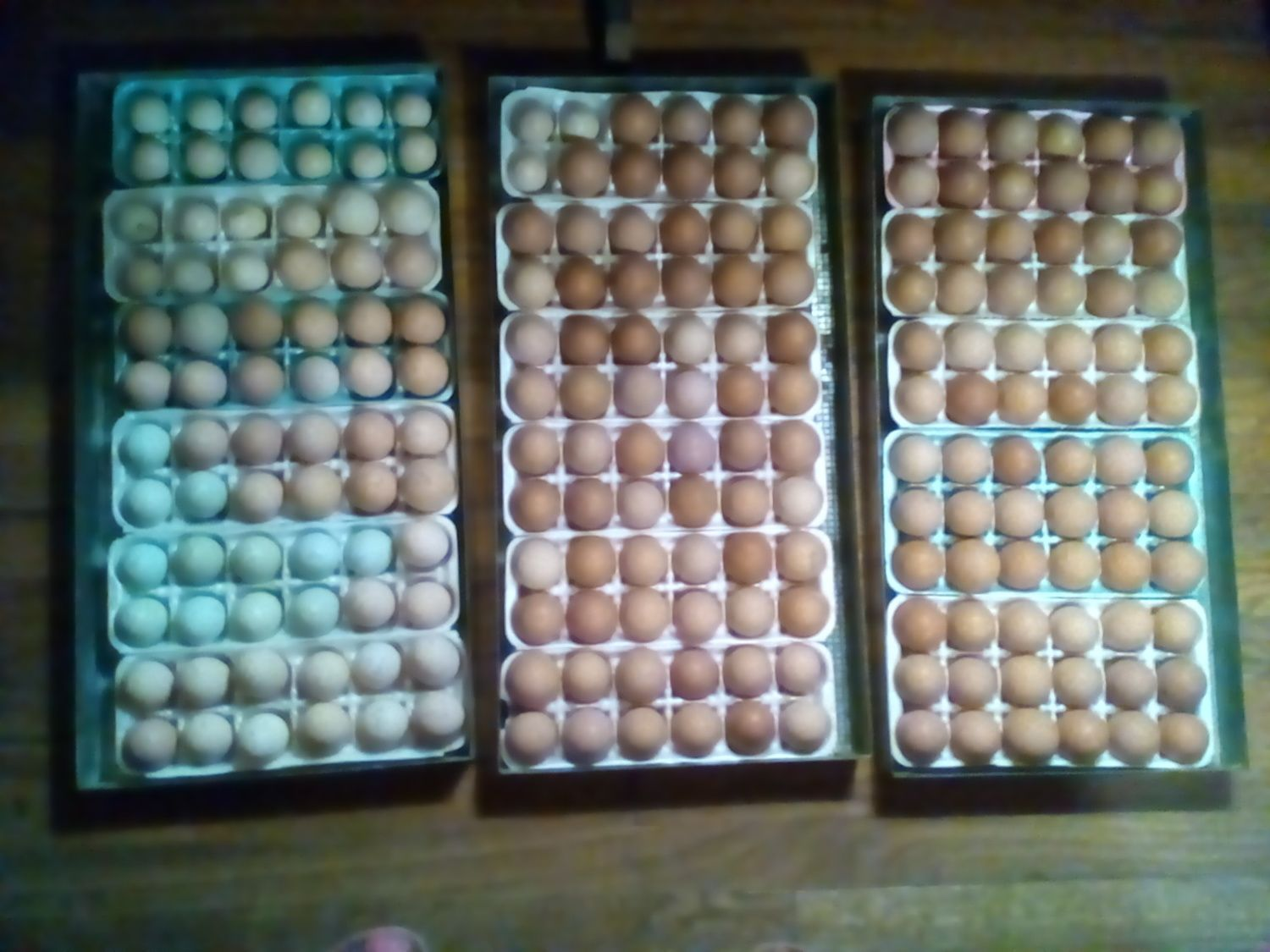 emvickrey's photos in The 8th Annual BYC Easter Hatch-a-long!!!!