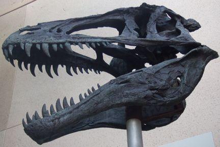 PaleoDan profile picture