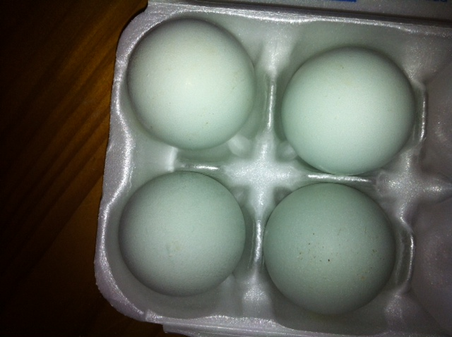 900x900px-LL-80a4603c_Blueeggs.png